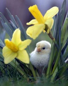 spring-1181