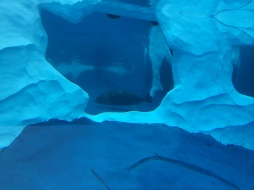 polar bear inside