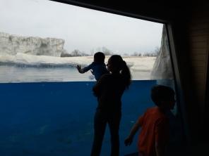 inside polar bear