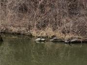 Turtle luv