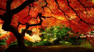 Amazing Autumn