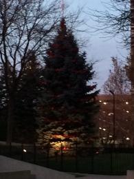 Gerald Ford Tree Unlight