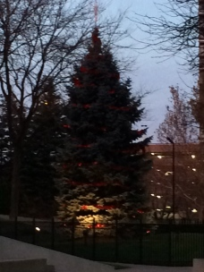 Gerald Ford Tree Unlight